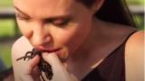 Анджелина Джоли нагъва тарантула в Камбоджа