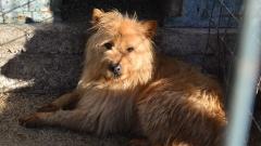 Бездомните кучета в София стават все по-малко, а котките - все повече