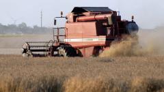408 кг от декар е средният добив от пшеницата