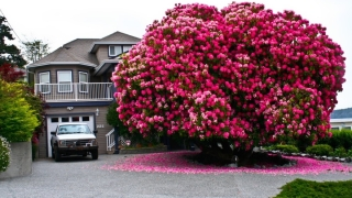 Вижте най-красивите дървета в света