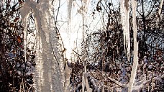 Рекордни студове в Севлиево