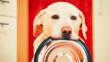 Колко често да мием паничката на кучето