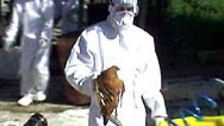 Обсъдиха мерки срещу птичи грип в Шумен