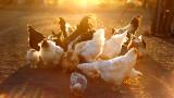Планетата на пилетата - символ на настоящата геоложка епоха