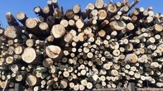 Близо 100 акта съставиха за незаконен дърводобив