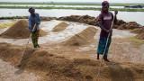 Оризът не е бил толкова скъп от 2013 година насам, след като COVID-19 удари износа му