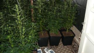 Задържаха 21 души при разкриване на 5 наркооранжерии в добричко