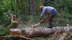 Служители на фирми за дърводобив протестират в Севлиево