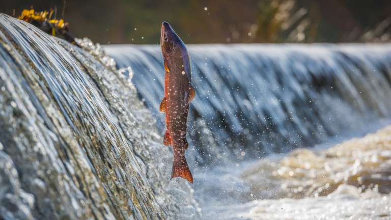 Как глобалното затопляне обрича рибите