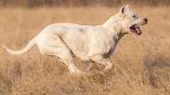 Разследват инцидента с нахапаната от куче 35-годишна в Дряновец