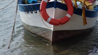 Рибари се притесняват - в Черно море няма паламуд