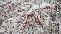 АПИ: Ветровито и снежно