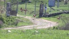 Освободиха 54 елени лопатари в Родопите