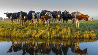 Колко вода спестяват вегетарианците