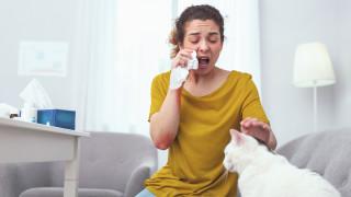 Симидчиев: Алергиите не могат да се сбъркат с коронавирус