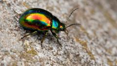 Защо някои бръмбари са блестящи