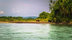 Еквадор продава 35% от дъждовните си гори на китайски петролни компании