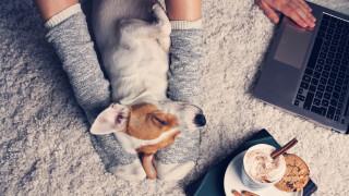 Каква порода куче да изберем, ако работим много