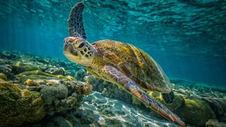 Откриха гигантска костенурка, смятана за отдавна изчезнал вид