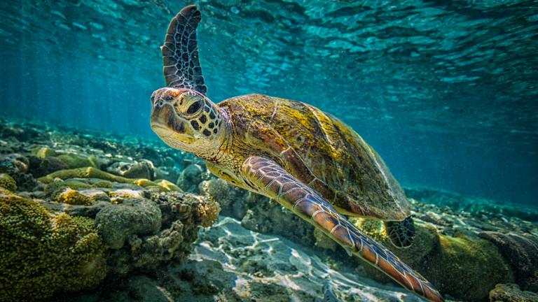 Откриха гигантска костенурка, смятана за изчезнал вид преди повече от