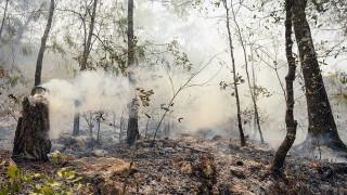 Пожарът в Новозагорско е овладян