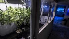 В Аржентина легализираха марихуаната