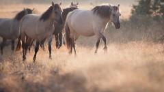 Нов сайт разкрива дивите кътчета и животни на Източни Родопи