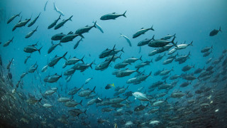 Удължиха с 5 години забраната за улов на застрашени видове есетрови риби