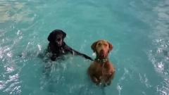 Куче, което не може да плува, стана хит в мрежата (ВИДЕО)