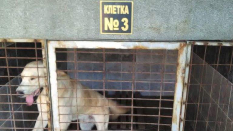 Граждани протестират срещу лоши условия в кучешки приюти