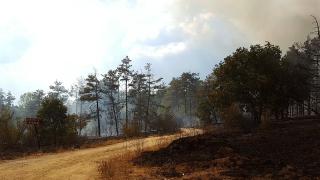 В Странджа пак гори