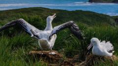 Най-старата известна дива птица в света измъти пиле