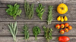 7 билки срещу вредители в градината