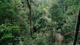 Правителства и корпорации обещаха да спрат обезлесяването до 2030-а