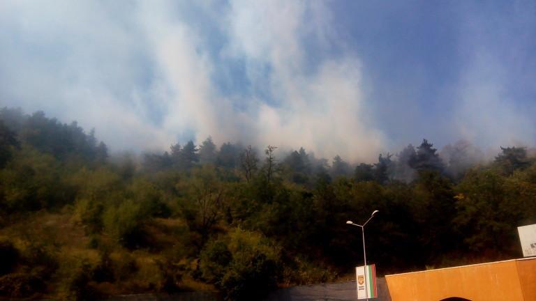 Загасен е пожарът, който горя в защитената местност Орловото блато
