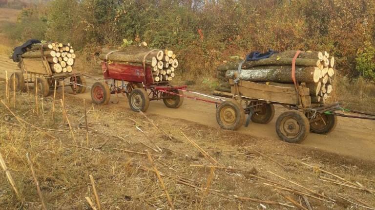 Общо 23 кубика дървесина са задържани за последните два