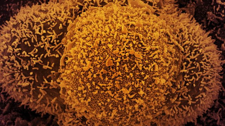 58 починали от коронавирус у нас