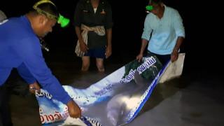 В Тайланд почина дюгон заради погълната пластмаса
