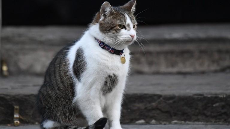 Антитела срещу COVID-19 при кучета и котки