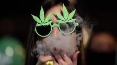 Холандският парламент разреши отглеждането на марихуана