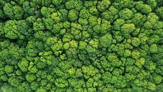 1/5 от държавите по света пред риск от разпадане на екосистемите