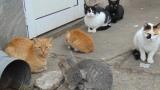 Коткомразец завеща на приют 275 000 долара