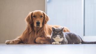 Вечният въпрос: кучетата или котките са по-умни