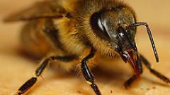 Пчелари искат от държавата българска марка мед