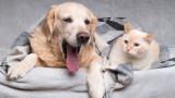 Котката или кучето сме по-склонни да изоставим