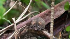 Климатичните промени взеха първата жертва бозайник - австралийски гризач