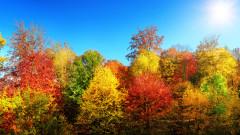 Денят ще бъде слънчев, тих и топъл
