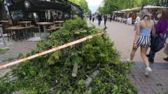 """Върху маси на столичния бул. """"Витоша"""" падна дърво"""