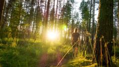 Изчезването на растенията е лоша новина за всички видове