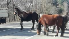 Безстопанствен кон е предизвикал катастрофата край Котел